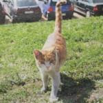 Disparen contra tres gats d´una colònia de la Nou Barris