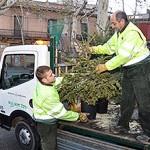 Moment de reciclar els arbres de Nadal