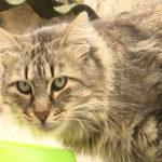 L'Associació Rescat reclama un local per tenir cura de les colònies de gats