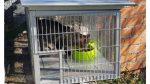 L'associació Rescat estrena gàbies antiporcs senglars a les colònies de gats a Collserola